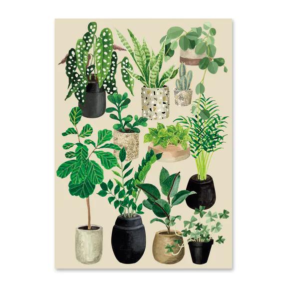 A4 plantes craie