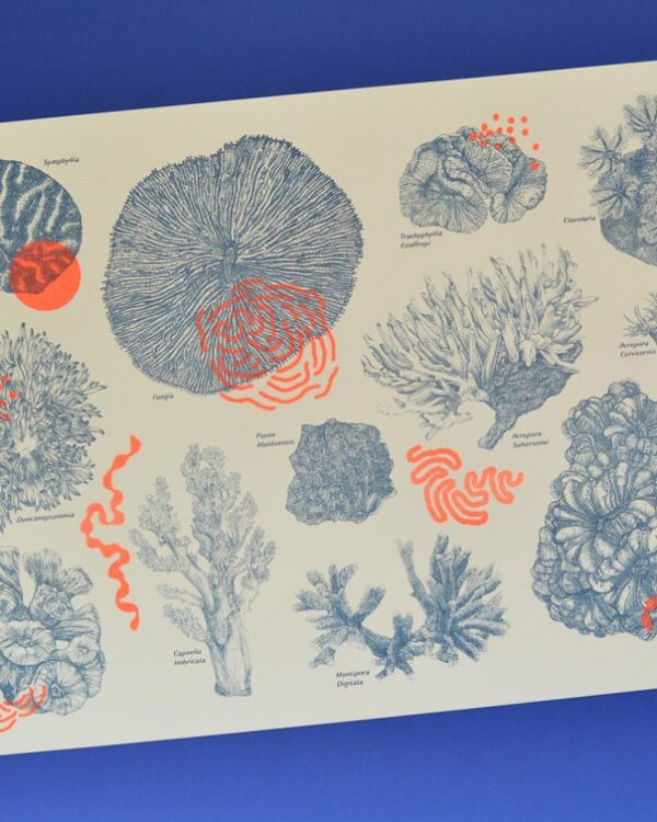 Amypiou Néon corail