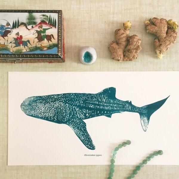 Amypiou requin baleine